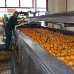 Fruchtpüreeproduktion am jüngsten Pfanner Produktionsstandort in Policoro/Süditalien. Foto: Hermann Pfanner Getränke GmbH