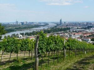 Beim Blick vom Nussberg auf Wien lässt es sich herrlich mit der Seele baumeln und nach einem turbulenten und arbeitsreichen Tag bei einem Glaserl Österreich-Wein herrlich relaxen und abschalten. Foto: ÖWM/Gerhard Elze