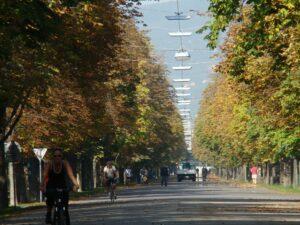 Im Prater und der Hauptallee verblühten die Bäume, der Herbst ist da und verwandelt alles in üppige Farben. Foto: oepb