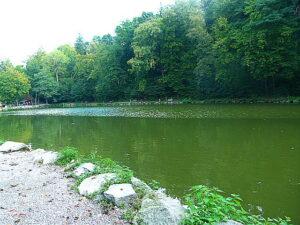 Zwischen Vogel-Stimmen-Weg, Abenteuer-Spielplatz und Braunbär-Gehege liegt idyllisch eingebettet der Jochteich, an dem gefischt werden darf. Foto: oepb