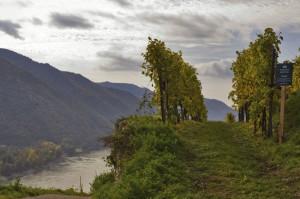 lick auf die Wachau im Bereich Weißenkirchen, Ried Achleiten. Foto: ÖWM