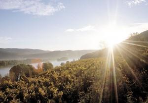 Die Weinlese wird in den nächsten Tagen und Wochen bei hoffentlich tollem Herbst-Wetter voll und ganz einsetzen. Foto: ÖWM / Himml