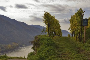 Blick auf die Wachau in Niederösterreich. Foto: ÖWM / Gerhard Trumler
