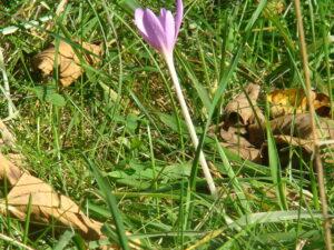 Herbst & Frühling_Foto oepb