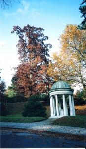 Herbst_Linzer Bauernberg.bild