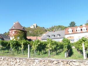 Blick auf die Burgruine Dürnstein in der Wachau und die sehr zahlreich ...