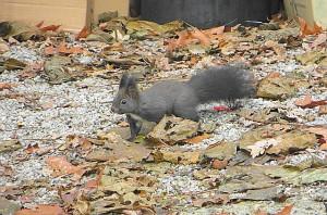 Wer kein Haustier hat, der sollte hinaus in die Natur wandern. Bei dem derzeit milden Winter erfreuen sich kleine Eichhörnchen ...