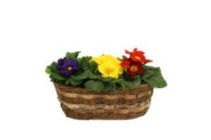 ... zertifiziert nach dem bellaflora Standard. Alle Fotos: bellaflora