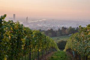 Wien-Blick. Foto: Raimo Rudi Rumpler