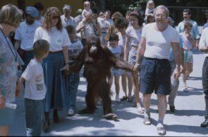 Nonja Mitte der 1980er Jahre, damals rund 9 Jahre, mit Zoopädagogin Gaby Schwammer und Tierpfleger Gerhard Mategka. Foto: Tiergarten Schönbrunn