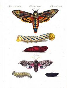 Kolorierter Kupferstich von Raupen und Schmetterlingen aus einem Bilderbuch für Kinder: Friedrich Bertuch, 1805. Foto: Österreichische Nationalbibliothek