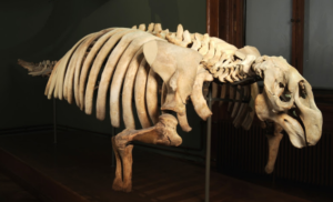 Google Art Project Naturhistorisches Museum Wien. Bild: Google