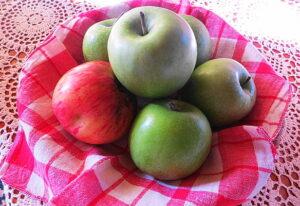 An apple a day keeps the doctor away. Wer täglich einen Apfel isst, benötigt keinen Onkel Doktor, so ein volksmundiger Ausspruch. Die Ernste 2016 ließ leider zu wünschen übrig, die Hoffnung auf ein ertragreicheres Jahr 2017 bleibt jedoch bestehen. Foto: oepb