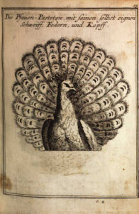 """Das """"Saltzburgisches Koch-Buch"""" von Conrad Hagger aus 1718 enthält mehr als 300 Abbildungen und erlaubt eine gute Vorstellung repräsentativ-barocker Lebensart. Foto: Österreichische Nationalbibliothek"""