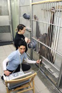 Regelmäßig stattfindende Untersuchungen durch die Tierärzte bestätigen, dass sich der Nachwuchs sehr gut entwickelt. Foto: Tiergarten Schönbrunn