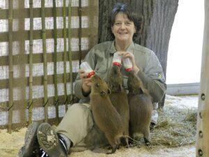 Tierpflegerin Daniela Peraus bei der Wasserschein-Fütterung. Foto: Tiergarten Schönbrunn/Norbert Potensky
