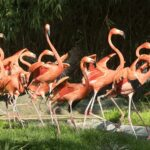 Rote Flamingos-Foto: Daniel Zupanc