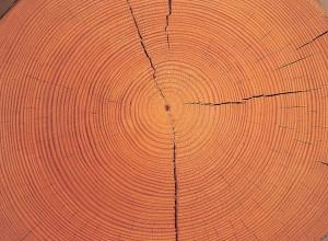 Holz, ein Rohstoff aus der Natur, der immer wieder nachwächst. Blick auf eine Stammscheibe Nadelholz. Foto: proHolz, Eberl
