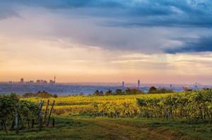 """""""Ich wollt, ich hätt gehaust in einem Weingarten bei Wien"""" - so eine Hans Moser Textzeile aus seinem berühmten Gassenhauer """"Die Reblaus"""". Blick über die Wiener Weingärten auf die Wiener Stadt. Foto: ÖWM / Lammerhuber"""