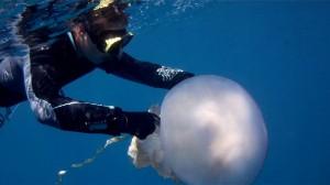 Karen Kienberger beim Vermessen einer Riesenqualle in Spanien: Foto: Darius Enayati