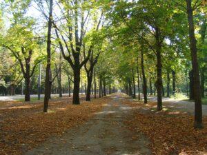 Ein Spaziergang in der Natur - gerade jetzt im Herbst - sollte immer sein. Die richtige Bekleidung hilft dabei, das Immunsystem zu stärken. Foto: oepb