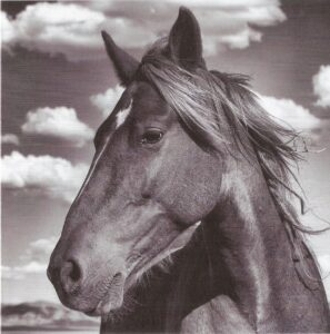 Mustangs. Fotografiert von Manfred Baumann.