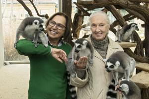 Die Tiergartendirektorin Dagmar Schratter (links), sowie Jane Goodall mit den quirligen Kattas. Foto: Daniel Zupanc