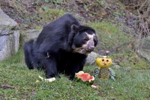 Geburtstagskind Juan - sichtlich verwundert und hoch erfreut. Foto: Tiergarten Schönbrunn/Norbert Potensky