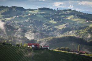 """uf den Hügeln der """"Grünen Mark"""" im Herzen Europas findet der Sauvignon Blanc ideale Bedingungen vor. Foto Steiermark: ÖWM/Anna Stöcher"""