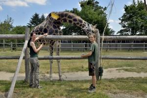 Kimbar genießt es sichtlich, von Eveline Dungl (links) und Irene Greter (rechts) gebürstet und versorgt zu werden. Foto: Tiergarten Schönbrunn/Nobert Potensky