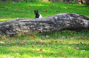 Wer Ruhe bewahrt und sich still verhält, kann auch solche Entdeckungen im Tierpark Haag erleben: Foto: oepb