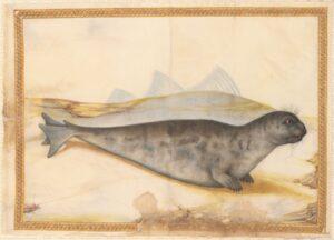 Naturstudie von Giorgio Liberale aus dem vor 1580 angefertigten Bilderalbum zur Tierwelt der Adria. Foto: Österreichische Nationalbibliothek