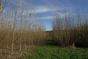 Holz ist ein Rohstoff aus der Natur, der immer wieder nachwächst ... Foto: ÖBMV