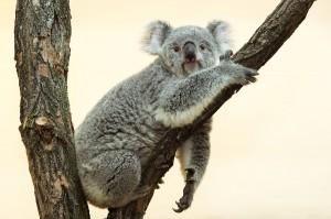 Sichtlich zufrieden nach den Reisestrapazen ist Bunji im Zoo Wien angekommen. Foto: Daniel Zupanc