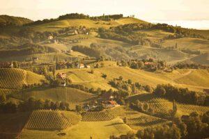 Weingipfel STMK 2009 - Sonnenaufgang in Leutschach. Foto: ÖWM / Anna Stöcher (anna@schauen.at)