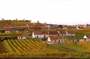 Herbst-Impressionen aus dem Weinbaugebiet Kamptal in Niederösterreich. ÖWM / Komitee Kamptal