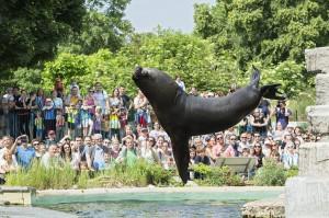 Blick auf eine Robbenfütterung. Die Besucher sind begeistert. Foto: Daniel Zupanc
