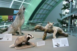 Blick auf Wolf und Konsorten im Haus für Natur im Museum Niederösterreich. Foto: Museum Niederösterreich