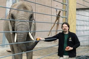Elefanten-Weibchen Numbi mit Revierleiter Andreas Buberl. Foto: Daniel Zupanc