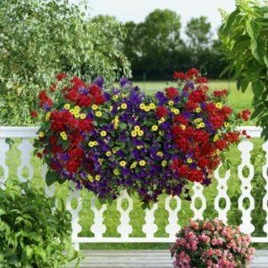 Um den Balkon farblich in Szene zu setzen, finden Kunden bei der grünen Nummer 1 ... Foto: bellaflora