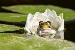 Frosch-Foto: Daniel Zupanc