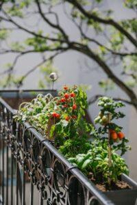 Auch am Balkon ist ein gesunder Bio-Gemüsegarten möglich. Foto: Marion Vicenta Payr / @ladyvenom / Buero de Martin