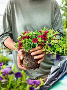 Mit bellaflora gelingt ein blühendes Farbenspiel auf Balkon und Terrasse. Foto: bellaflora