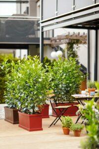 Der neue Trend für Garten und Terrassen sind die mobilen Hecken von bellaflora, die schnell und unkompliziert für Privatsphäre sorgen. Foto: bellaflora