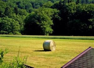 Eine nachhaltige Strategie zur Grünland- und Ackerbewirtschaftung zeigt große Möglichkeiten auf. Foto: oepb
