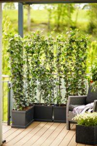 Die mobilen Hecken sind ein dekorativer Blickfang und eignen sich nebenbei als praktischer Sicht- und Lärmschutz - sowohl für den privaten, als auch gewerblichen Bereich. Foto: bellaflora