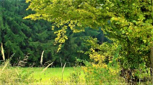 """""""Sofortmaßnahmen zur nachhaltigen Stärkung heimischer Wälder."""", fordert Bauernbund-Präsident Georg Strasser. Foto: oepb"""