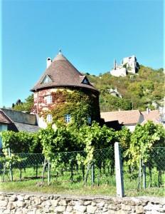 Blick auf einen Weingarten in Dürnstein in der Wachau. Der Jahrgang 2019 lässt in Österreich harmonische und ausgewogene Weine erwarten. Foto: opeb
