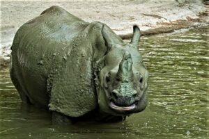 Nashorn-Foto: Paul Berger