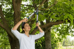 Für frisches Holz aber auch für ältere und trockene Äste eignen sich die GARDENA EasyCut Astscheren. Foto: GARDENA